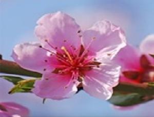 crbst_fleure1r